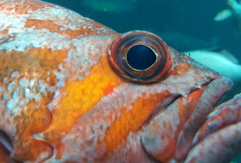 Up close and personal with an Orange Rock Fish at the local aquarium