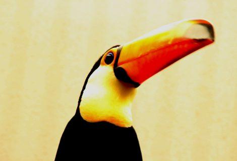 pixabaytropical-bird-1479800_1280